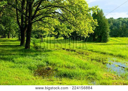Spring landscape. Green spring trees and flooded spring lawn in the park in sunny weather. Colorful spring nature, sunny spring landscape view of park lit by spring sunlight. Spring landscape scene