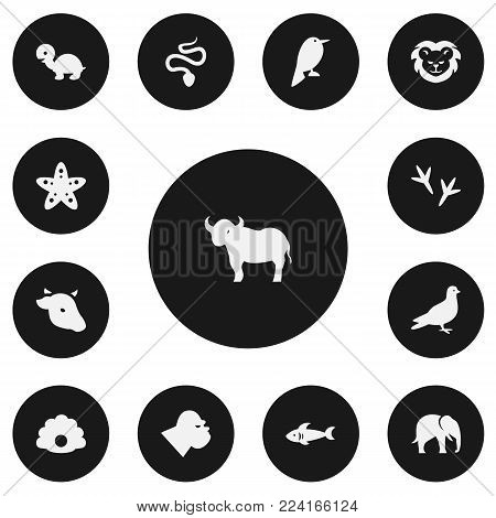 Set of 13 editable zoo icons. Includes symbols such as nightingale, lion, chicken feet and more. Can be used for web, mobile, UI and infographic design.