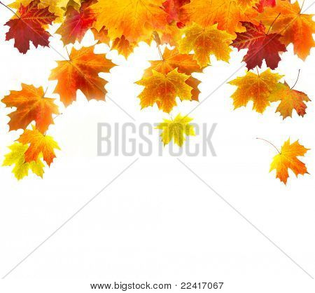 Autumn background of colored leafs