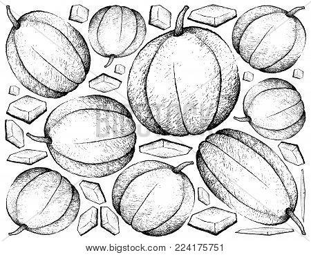 Fresh Fruit, Illustration Background of Hand Drawn Sketch of Muskmelon, Cantaloupe, Mushmelon, Rockmelon, Sweet Melon or Spanspek Fruits.