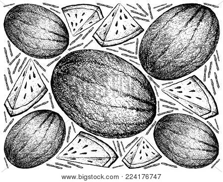 Fresh Fruit, Illustration Hand Drawn Sketch of Fresh Watermelon or Citrullus Lanatus Isolated on White Background.
