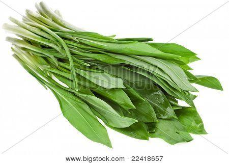 Fresh wild garlic leaves on a white background , Ramson