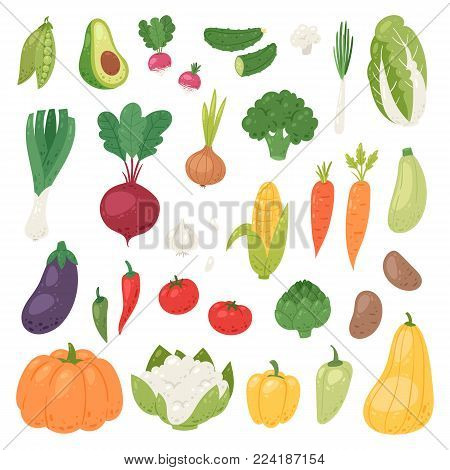Vegetables vector healthy nutrition of vegetably tomato pepper and carrot for vegetarians eating organic food from grocery illustration vegetated set diet isolated on white background.