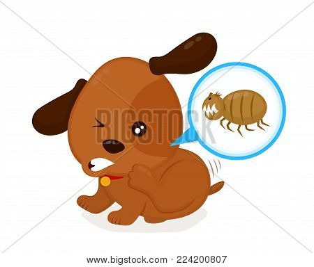 Cute angry itchy dog scratches fleas off. Domestic or stray dog with skin parasites. Pet and fleas.parasite under a microscope. Vector flat cartoon character illustration icon. Isolated on white