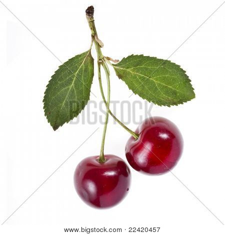 Two Cherries isolated