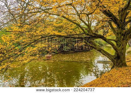 Yellow Tree In Montsouris Park In Paris In Fall