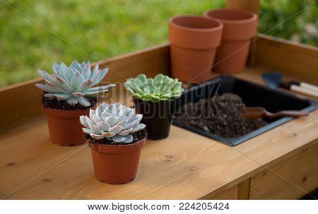 Succulent Plants On Garden Bench