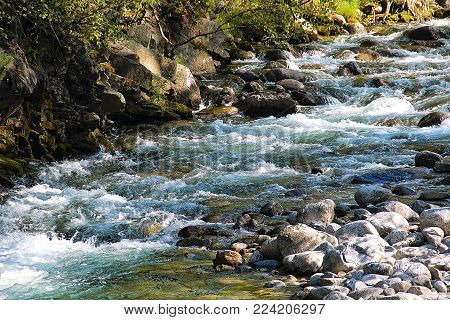 Mountain stream in the forest. Siberia in the summer, taiga
