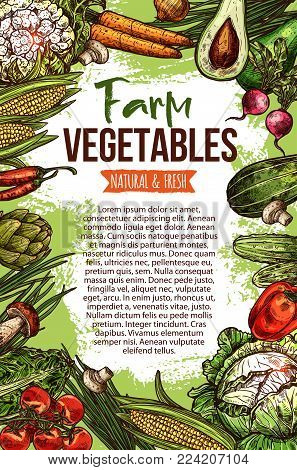 Vegetables and natural farm veggie organic products sketch poster. Vector cabbage, zucchini squash or avocado and cucumber, cauliflower and carrot or radish and tomato, fresh pumpkin and garlic