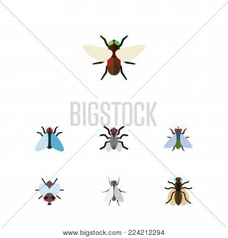 Icon flat fly set of bluebottle, buzz, mosquito and other vector objects. Also includes gnat, dung, housefly elements. poster