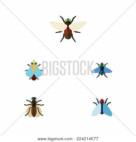 Icon flat housefly set of mosquito, bluebottle, tiny and other  objects. Also includes bluebottle, gnat, dung elements.