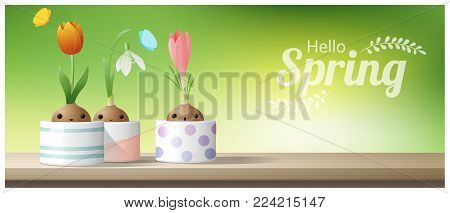 Hello Spring background with Spring flower Crocus, Tulip, Snowdrop on wooden table top , vector , illustration
