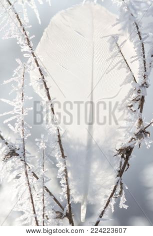 White feather between branches covered by frost