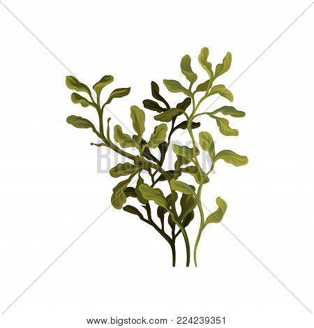 Green underwater seaweed, aquatic marine algae plant vector Illustration on a white background