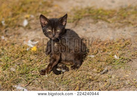 Outdoor portrait of young cat horrifying the poultry-yard