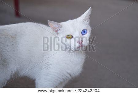 A Weird Cat