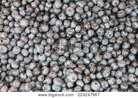 A Bunch Of Some Freshly Picked Blueberries