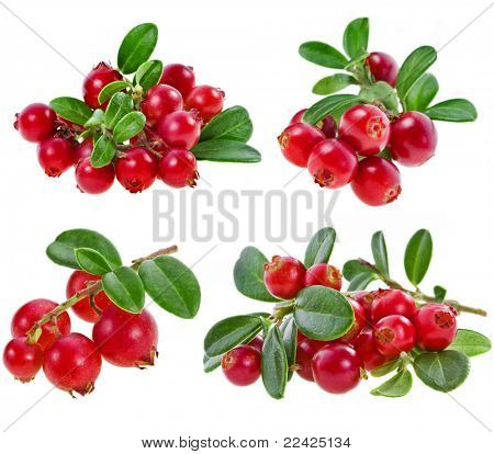 collection fresh cranberries isolated on white background