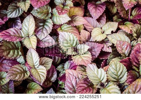Leaves Of Bright Colors On A Background