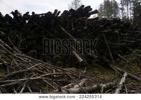 Pile of logs and lobster traps in front of deserted weathered cabin in Nordic landscape