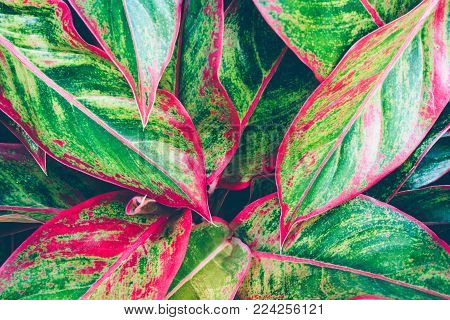 Leaves Colorful Of Bright Colors Nature Background