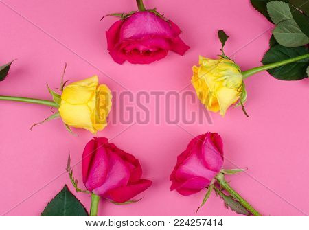 Bright pink and yellow roses forming a circle on a bright pink paper background, copy space in the center for your text (flat lay, top view)