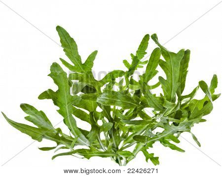 rucola lettuce Arugula  isolated on white