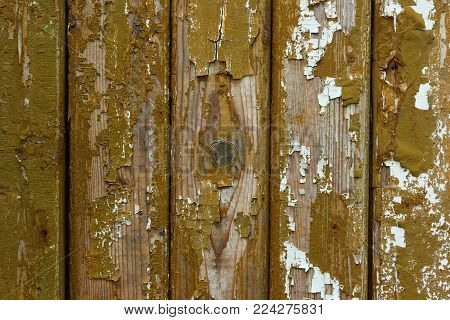 The old shabby wood texture. The muddy green texture of the old shabby wood wall.