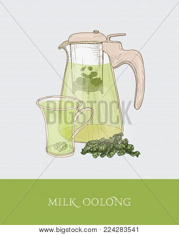Transparent teapot or jug with strainer and steeping milk oolong, cup and tea leaves hand drawn in elegant vintage style. Traditional Taiwanese drink. Colorful vector illustration for tag, label