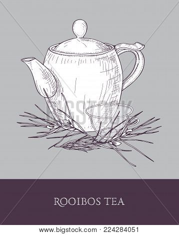 Elegant teapot, glass cup with steeping rooibos tea and plant with leaves hand drawn with contour lines on gray background. Detailed drawing of tasty aromatic beverage. Vector illustration for label
