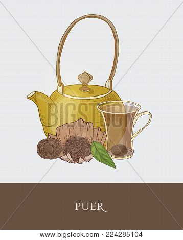 Gorgeous teapot, transparent glass cup with steeping tea, raw pu-erh and fresh leaves on gray background. Tasty fermented drink. Colored vector illustration hand drawn in vintage style for tag, label