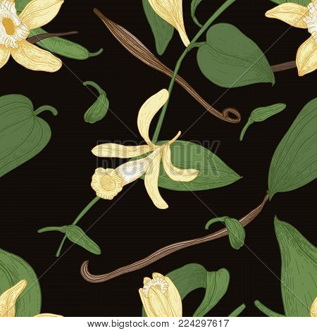 Elegant natural seamless pattern with vanilla, leaves, flowers and fruits or pods on black background. Botanical vector illustration in vintage style for textile print, wallpaper, wrapping paper