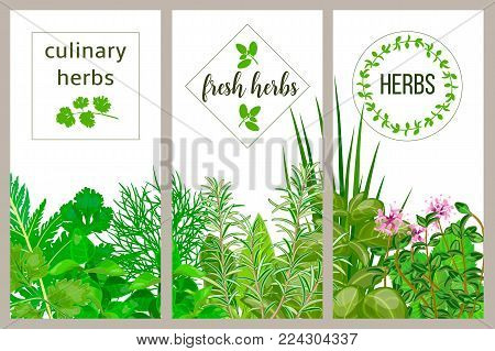 Farm fresh cooking herbs. Set of culinary cards. Greenery, basil, vector icon, rosemary, herbal set, thyme, dill, mint, chives text Horticulture houseplants Kitchen Gardening Hydroponik