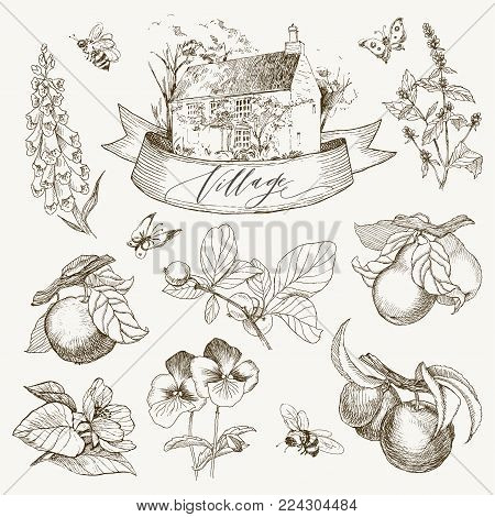 Vintage style of village details and objects. Detailed illustration engraving style. For cards, typography