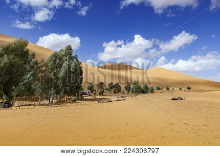 oasis in the Sahara desert on the background sand dunes, Morocco