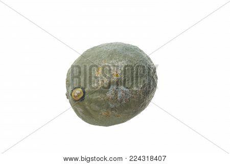 moldy lemon on  a white background isolated