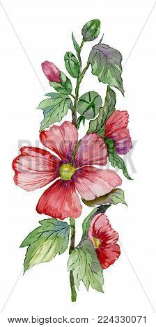 Red malva flowers on a stem with green leaves and buds. Fresh mallows isolated on white background.  Watercolor painting. Hand drawn.