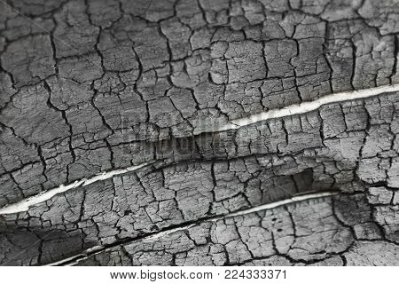 Burnt wood grey background. Surface of charcoal. Charred tree texture