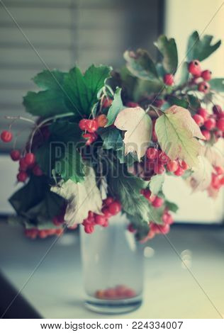 Guelder-rose fruits with leaves on branches in a vase