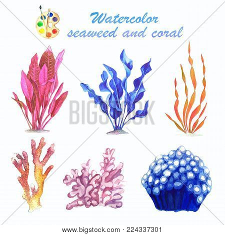 A set of watercolor images of seaweed and coral on a white background. A collection of bright hand-made illustrations. Isolated drawings of hand-painted.