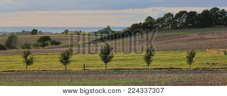 Rural summer scene in Denmark. Striped landscape in Zealand, Denmark. Fields covering hills.