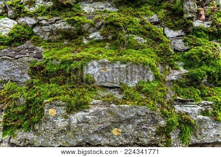 Stones covered with moss. Old wall of the building. Green moss