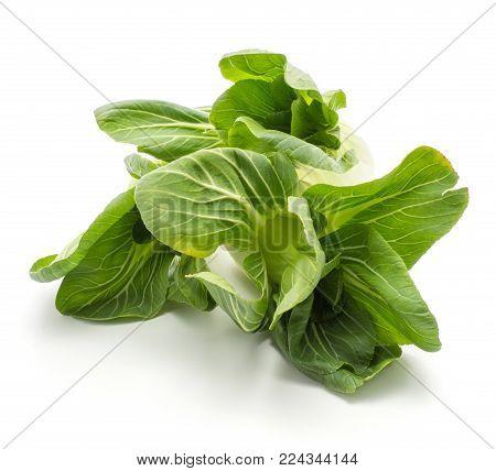 Bok choy (Pak choi) fresh green flowerlike leaves isolated on white background