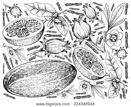 Fruit, Illustration Hand Drawn Sketch of Thai Muskmelon, Roselle and Grapefruit Fruits Isolated on White Background.