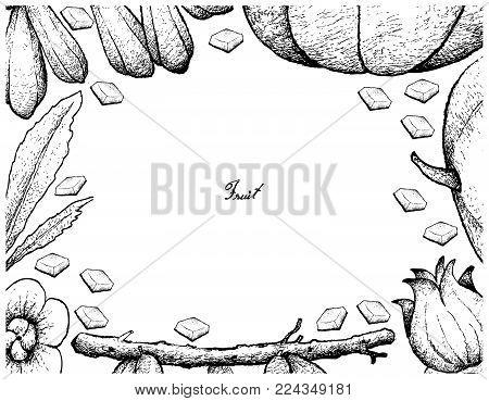 Fresh Fruit, Illustration Hand Drawn Sketch of Averrhoa Bilimbi, Roselle and Muskmelon or Cantaloupe Isolated on White Background.