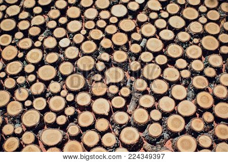 Large circular piece of wood cross section with tree ring texture pattern and cracks. Orange and black circular pattern.