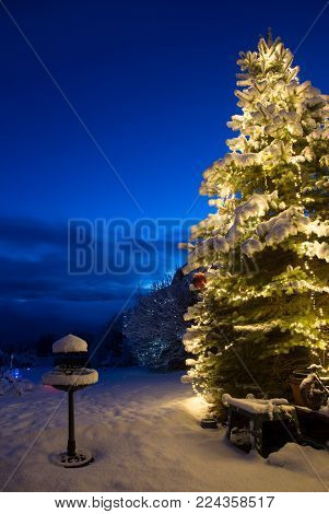 Snow covered  pine tree with lighting ornament, at blue hour