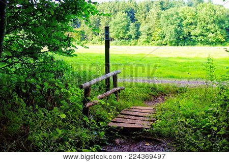 Forest path in the green nature with an old wooden bridge