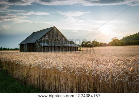 Abandoned Shack in the Field at Sunset
