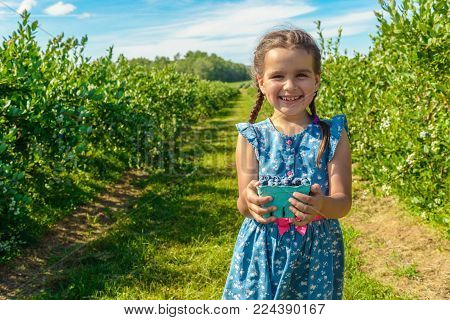 Cute girl standing and holding in her hands blueberries on the background of blueberries bushes (Annapolis Valley, Nova Scotia, Canada)